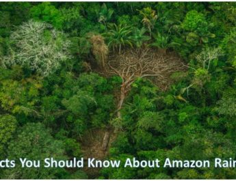 7 Facts You Should Know About Amazon Rainforest